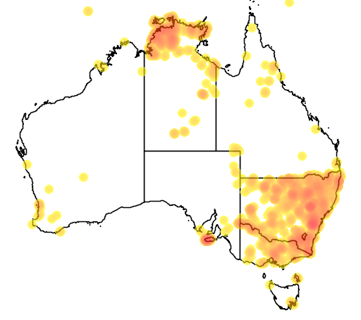 wild pig map in Australia.png